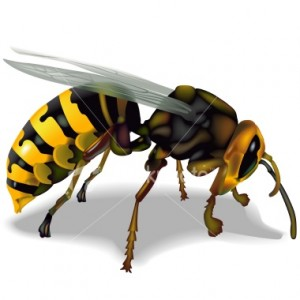 63 Gambar Hewan Lebah Terbaik